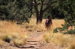 Emory Peak Trail Photos libres de droits