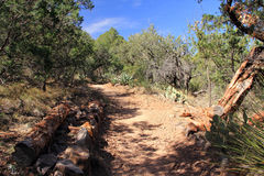 Emory Peak Trail. The Difficult but Scenic Emory Peak Trail in the Chisos Mountains of Big Bend National Park in the State of Texas Stock Image