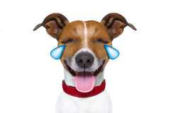 Emoticon or Emoji dumb crying laughing dog stock images
