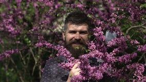 Emoties en gezichtsexpxression De lentemens De aard van de lente Gelukkige mens met baard en lilac bloesem E stock video