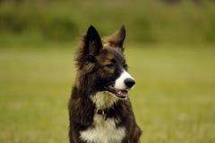 Emoties van dieren Jonge energieke hond op een gang Puppyonderwijs, cynology, intensieve opleiding van jonge honden Binnen lopend stock foto