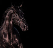 Emotion portrait of beautiful black breed stallion in field.  Stock Images