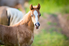 Emotion of small foal of horse Royalty Free Stock Photos
