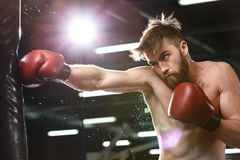 Emotional concentrated young strong sports man boxer. Image of emotional concentrated young strong sports man boxer make exercises in gym and looking aside royalty free stock image