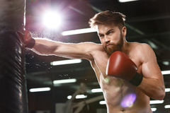 Emotional concentrated young strong sports man boxer. Picture of emotional concentrated young strong sports man boxer make exercises in gym and looking aside stock photo