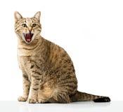 Emotional domestic cat Stock Photos