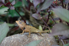 Emotional view of lizard. Royalty Free Stock Images