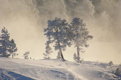 Emotional winter Stock Images