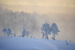 Emotional winter Stock Photography