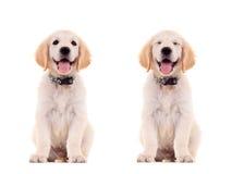 Emotionele twee stellen van een leuk puppy Stock Foto