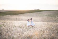 Emotionele zusters op tarwegebied bij zonsondergang Royalty-vrije Stock Foto