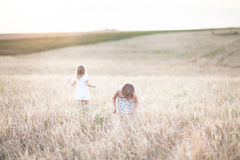 Emotionele zusters op tarwegebied bij zonsondergang Royalty-vrije Stock Afbeeldingen