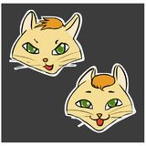 Emotions Angry and Glad Cat`s faces Royalty Free Stock Images
