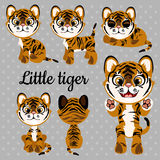 Emotions baby tiger on a gray background Stock Images