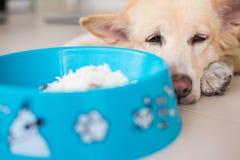 Emozione adorabile del cane fotografia stock libera da diritti