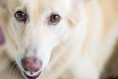 Emozione adorabile del cane Fotografie Stock Libere da Diritti
