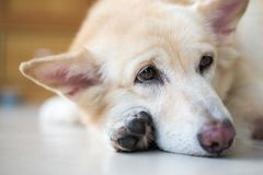 Emozione adorabile del cane fotografia stock