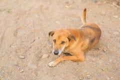 Emozione del cane fotografie stock libere da diritti