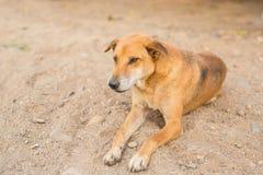 Emozione del cane Fotografia Stock