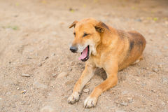 Emozione del cane Immagini Stock Libere da Diritti