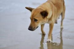 Emozioni tristi del cane Immagini Stock