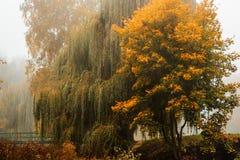 Empáñese sobre el río en bosque en el otoño Fotografía de archivo libre de regalías