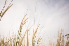 Empañado de hierba y del cielo Imagen de archivo libre de regalías