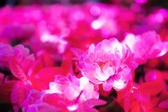 Empañado de la flor rosada con forma redonda iluminó la iluminación del LED Imágenes de archivo libres de regalías