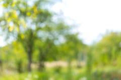 Empañe el fondo natural y ligero en el parque foto de archivo libre de regalías