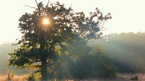 Empañe el paisaje de la niebla sobre el lago en Autumn Fall con colores vibrantes almacen de video