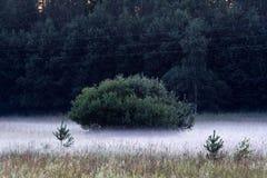 Empañe la colocación bajo alrededor de un arbusto verde en un campo Fotografía de archivo libre de regalías