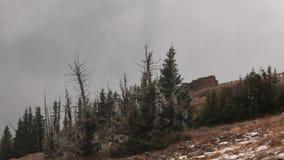 Empañe las derivas a través de una ruina vieja encima del pico de Brian Head en Utah meridional en un día nevoso frío en octubre almacen de video