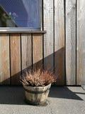 Empañe las flores secadas en el cubo de madera del pote con la pared y el fondo de madera en tablones horizontales, wa de madera  Imagen de archivo