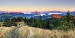 Empañe los árboles cubiertos en el valle con el cielo azul brillante Foto de archivo
