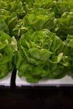 Empacotamento de alimento II Imagens de Stock