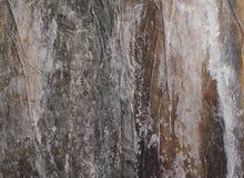Empañe el fondo, superficie del primer seco del quelpo de la hoja salada Fotos de archivo libres de regalías