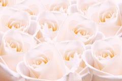 Empalideça - rosas cor-de-rosa. imagem de stock