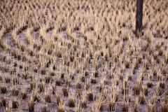 Empanada circular cosechada del arroz en Japón Imagenes de archivo