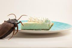 Empanada de la lima agria en la placa azul con la cucaracha Fotos de archivo libres de regalías