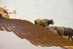 Empanadas secadas del estiércol de la vaca que secan el combustible el Ganges la India imagen de archivo