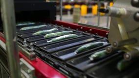 Empaquetadora para el pepino en la fábrica almacen de video