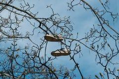 Emparéjese de los zapatos que cuelgan en el árbol aislado imagen de archivo libre de regalías