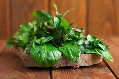 Emparedado vegetariano Bocadillo con los verdes para la comida cruda Imagen de archivo libre de regalías
