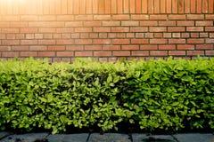 Emparede el ladrillo y el arbusto verde sobre el hormigón de la tierra en el parque con la luz del sol dura Foto de archivo libre de regalías