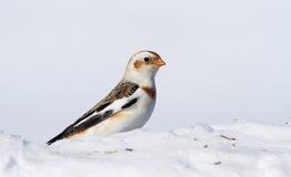 Empavesado de nieve Fotos de archivo