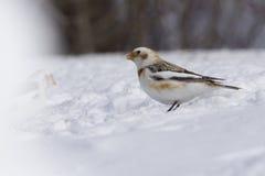 Empavesado de nieve en invierno Imagen de archivo libre de regalías