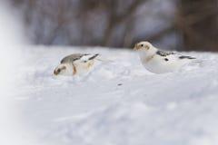 Empavesados de nieve en invierno Imagen de archivo