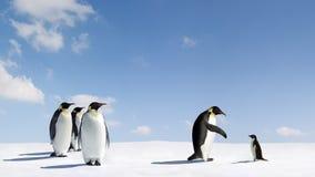 Emperador y pingüinos de Adelie Fotos de archivo libres de regalías
