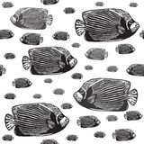 Emperor angelfish black and white seamless  pattern. Realistic engraved style of fishes on white background Stock Images