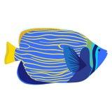 Emperor angelfish cartoon isolated illustration. Pomacanthus imperator. Vector stock illustration
